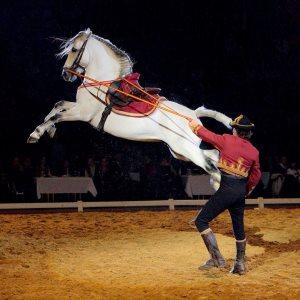 Portekiz Lusitano Atları