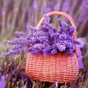 Lavanta Çiçeği