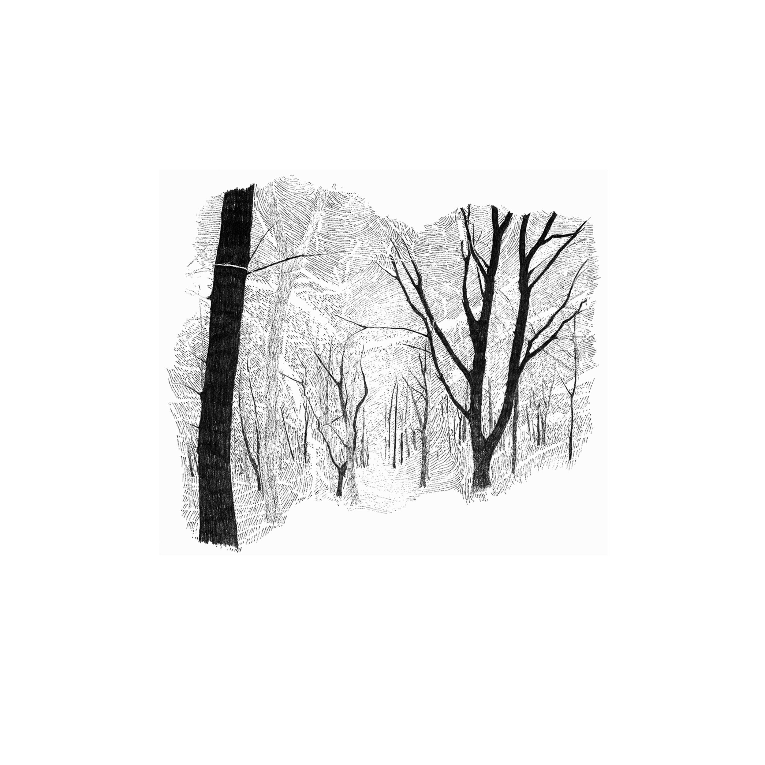 Hide 1 Seek by Etienne de Fleurieu , Dessin