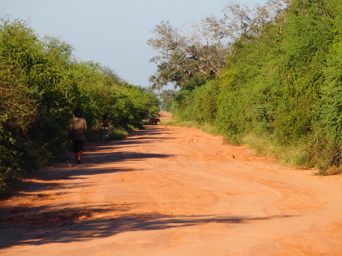 Unsere Guides Rodrigo und Joanna auf den Spuren eines Tapirs (im Hintergrund)