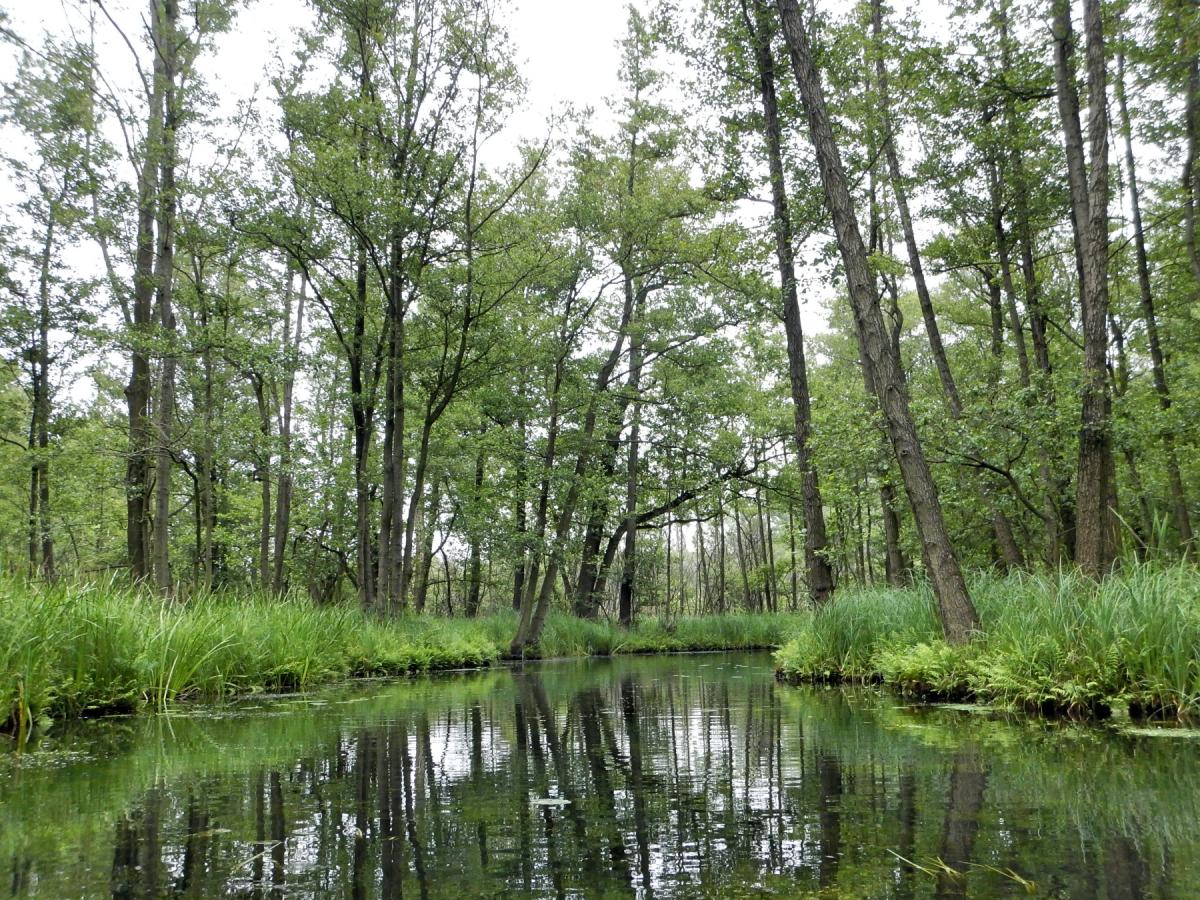 Flussimpressionen.jpg
