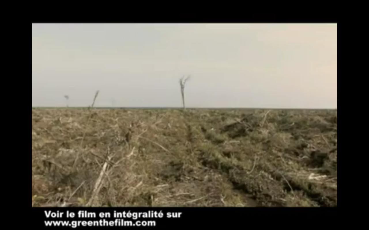 green-deforestation