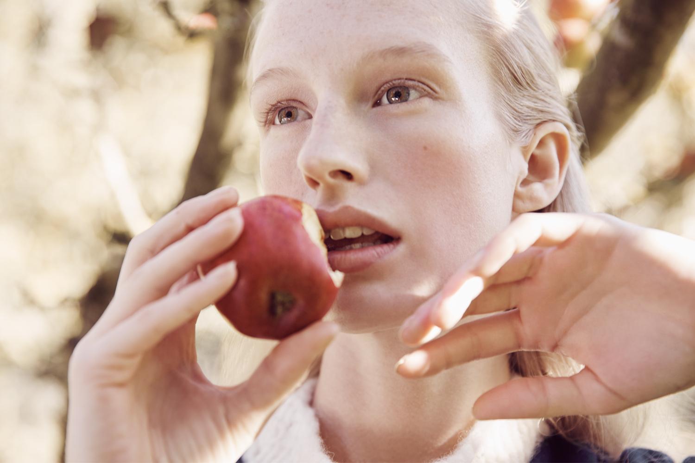 apple_harvest_1.jpg