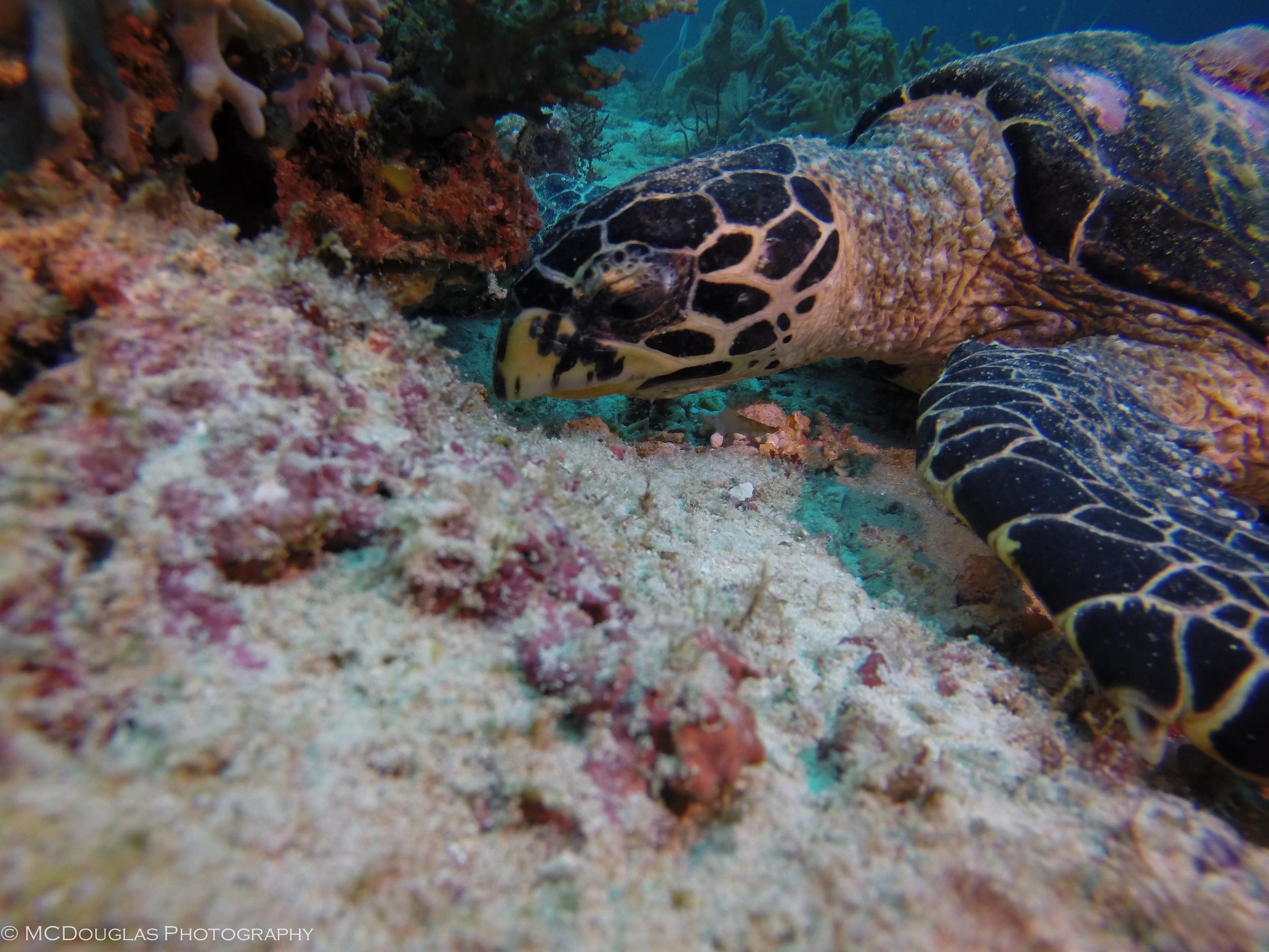 Underwater-0425.jpg