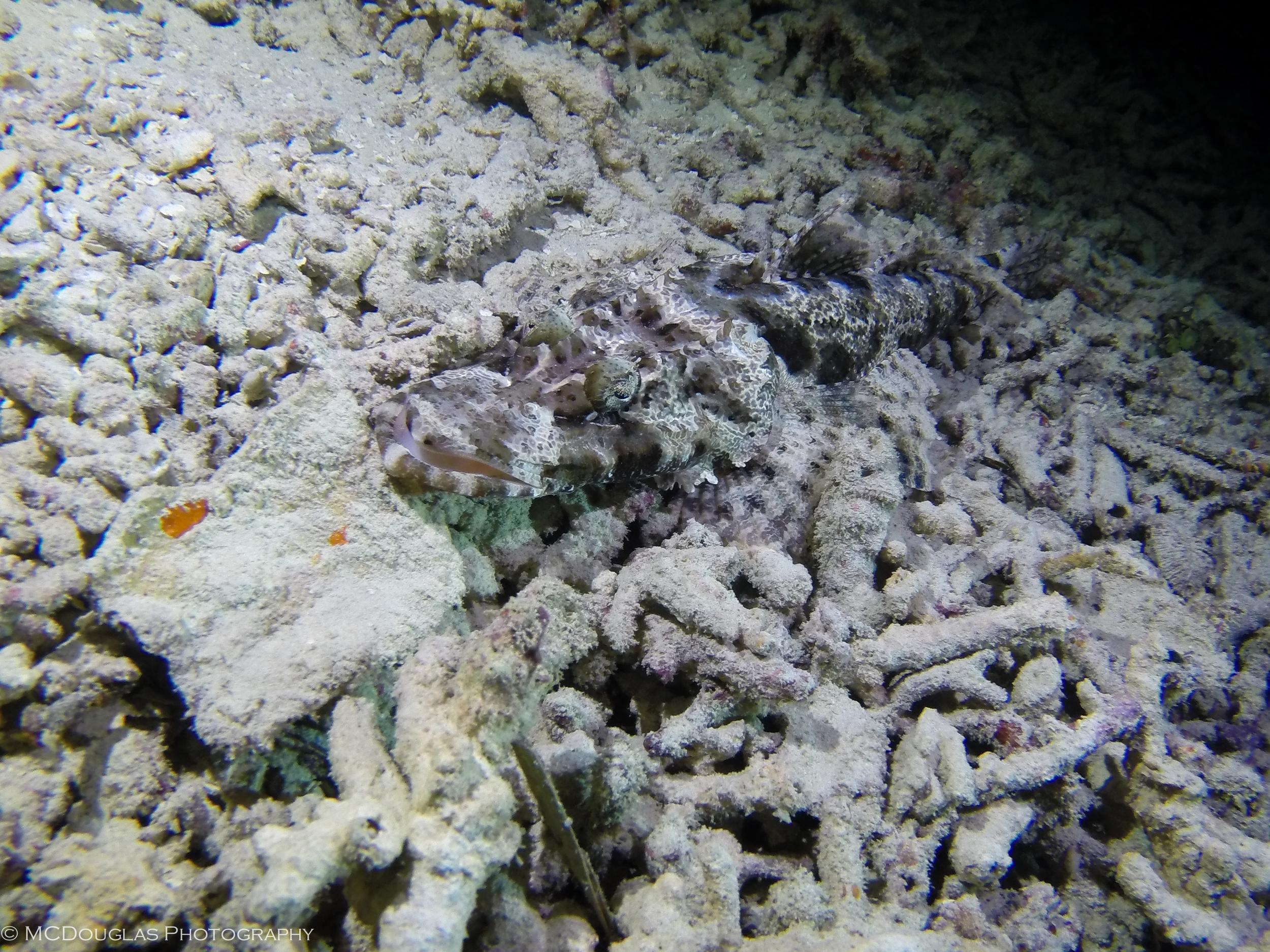 Underwater-0551.jpg