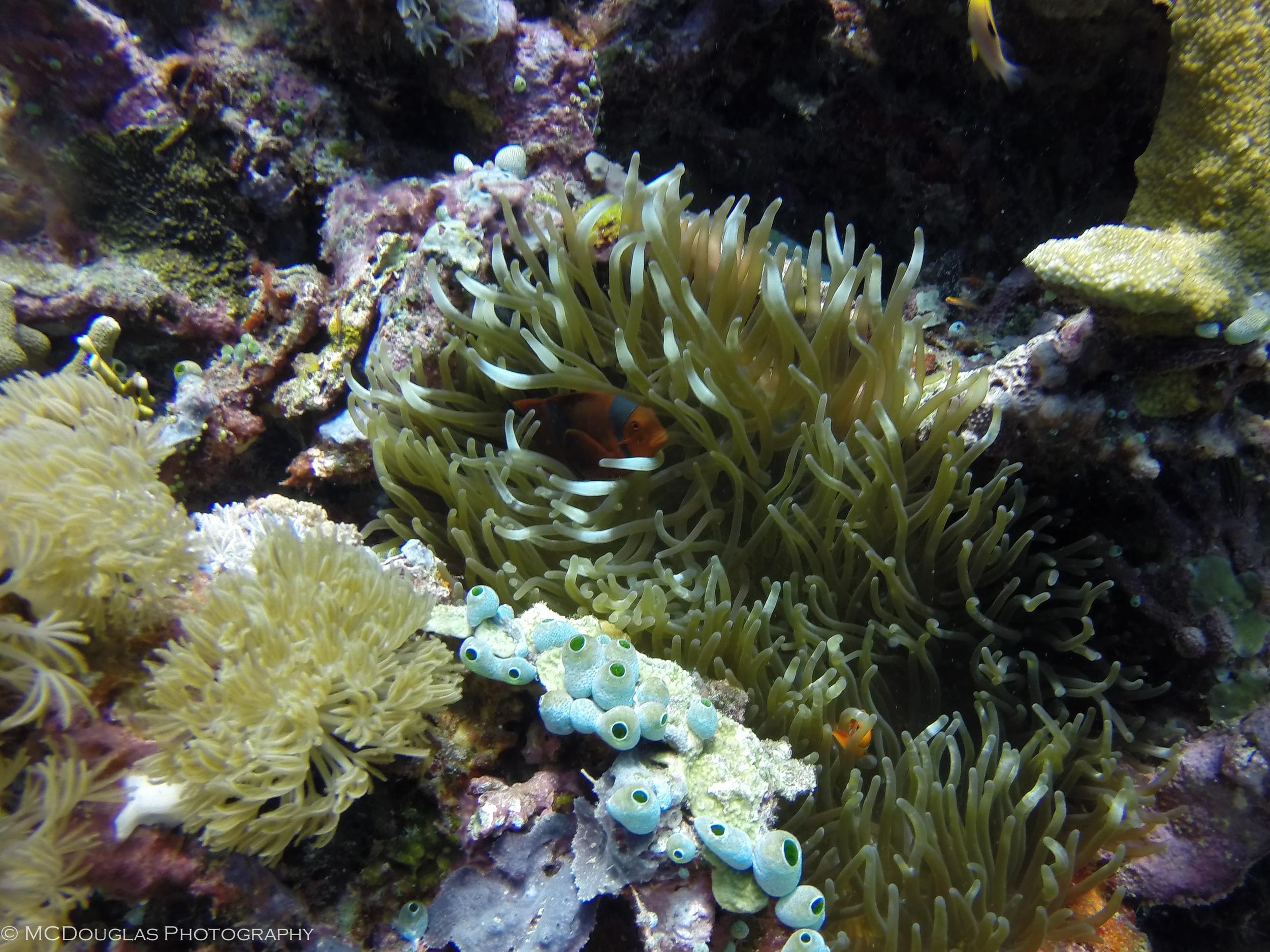 Underwater-0303.jpg