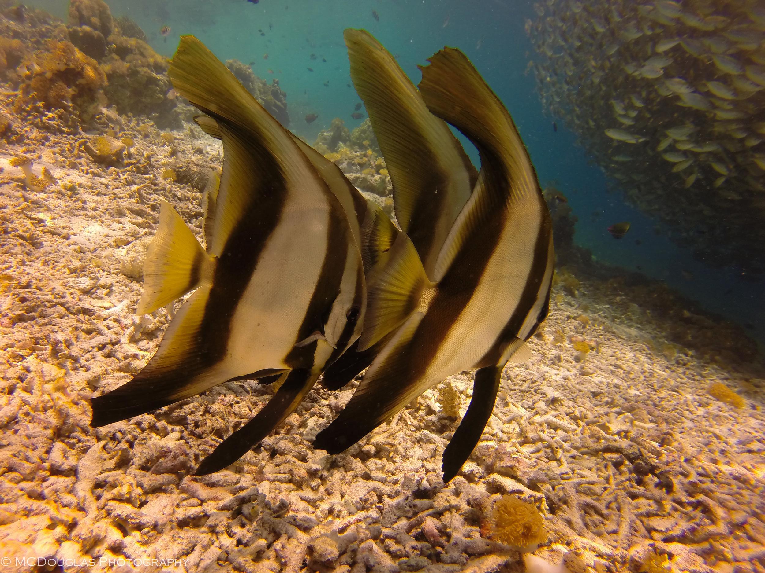 Underwater-0338.jpg