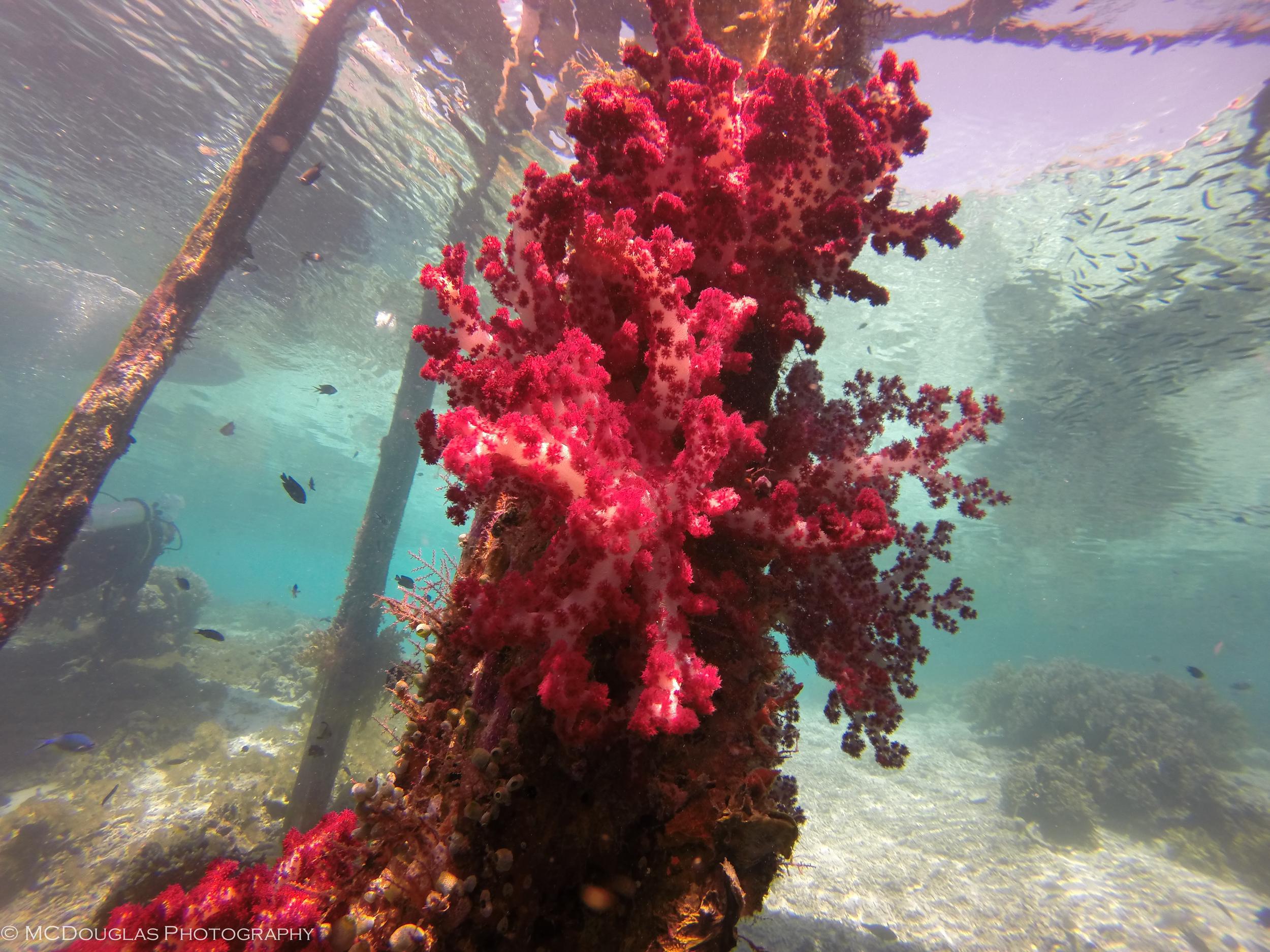 Underwater-0363.jpg