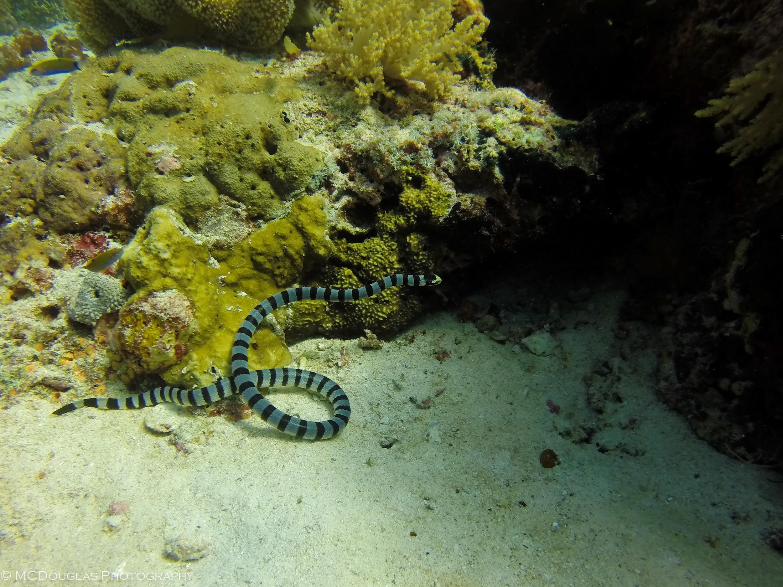 Underwater-0616.jpg