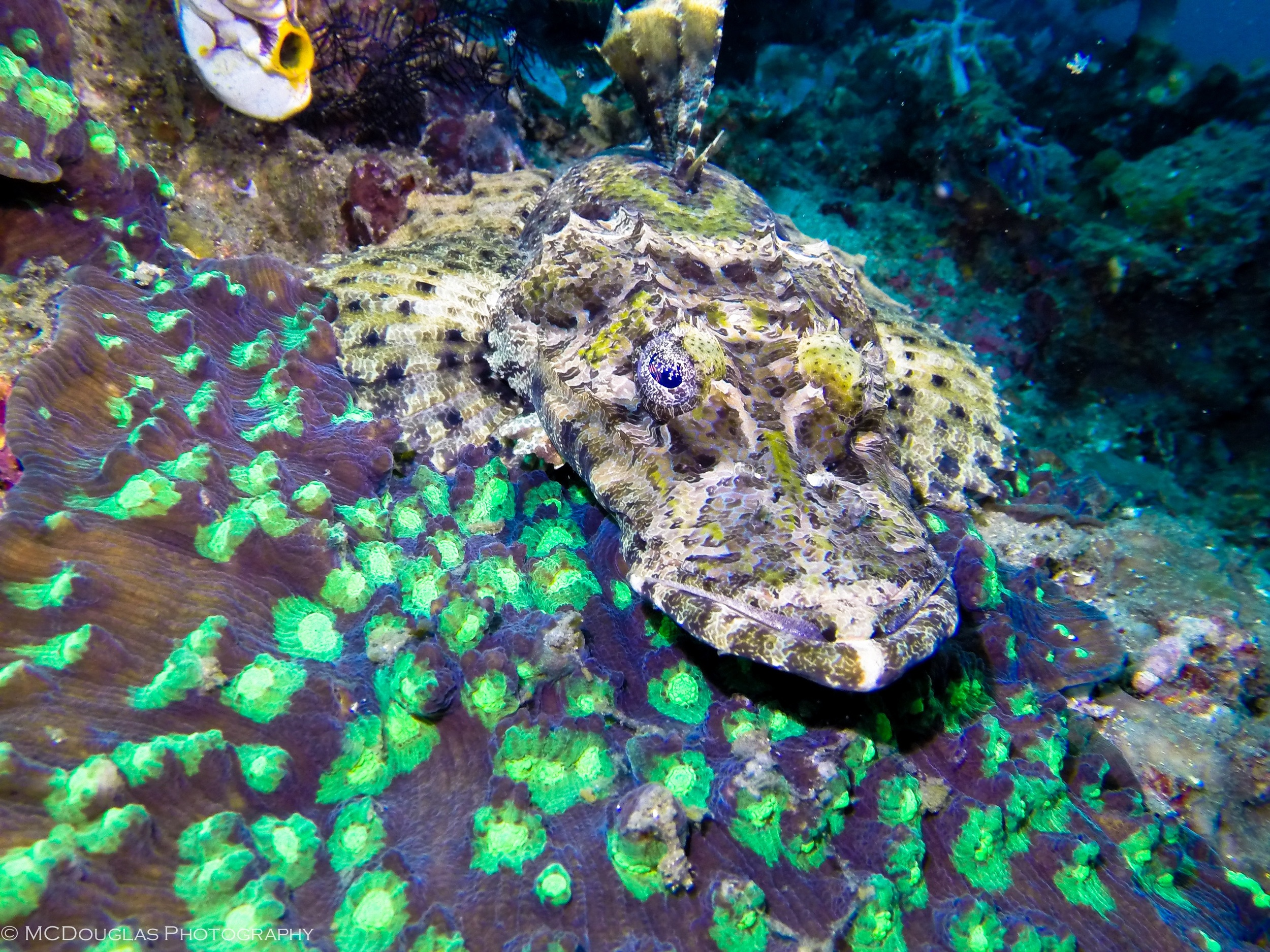 Crocodile Fish.JPG