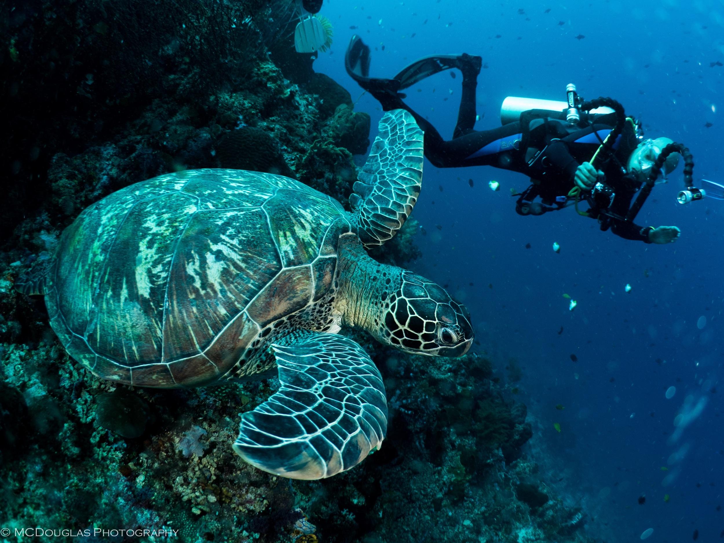 Me & Turtle.JPG
