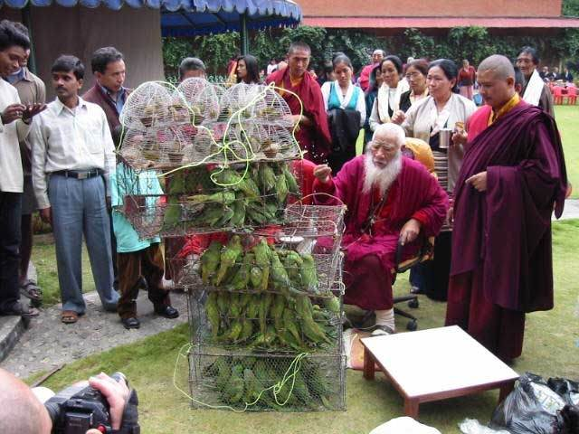 HH Chadral Rinpoche releasing birds