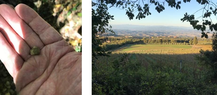 truffle hand.jpg
