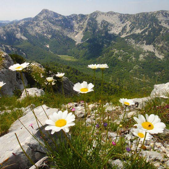 Orjen-proljece-pogled-sa-Jastrebice-Orjen-in-the-spring-view-Jastrebice-550x550.jpg