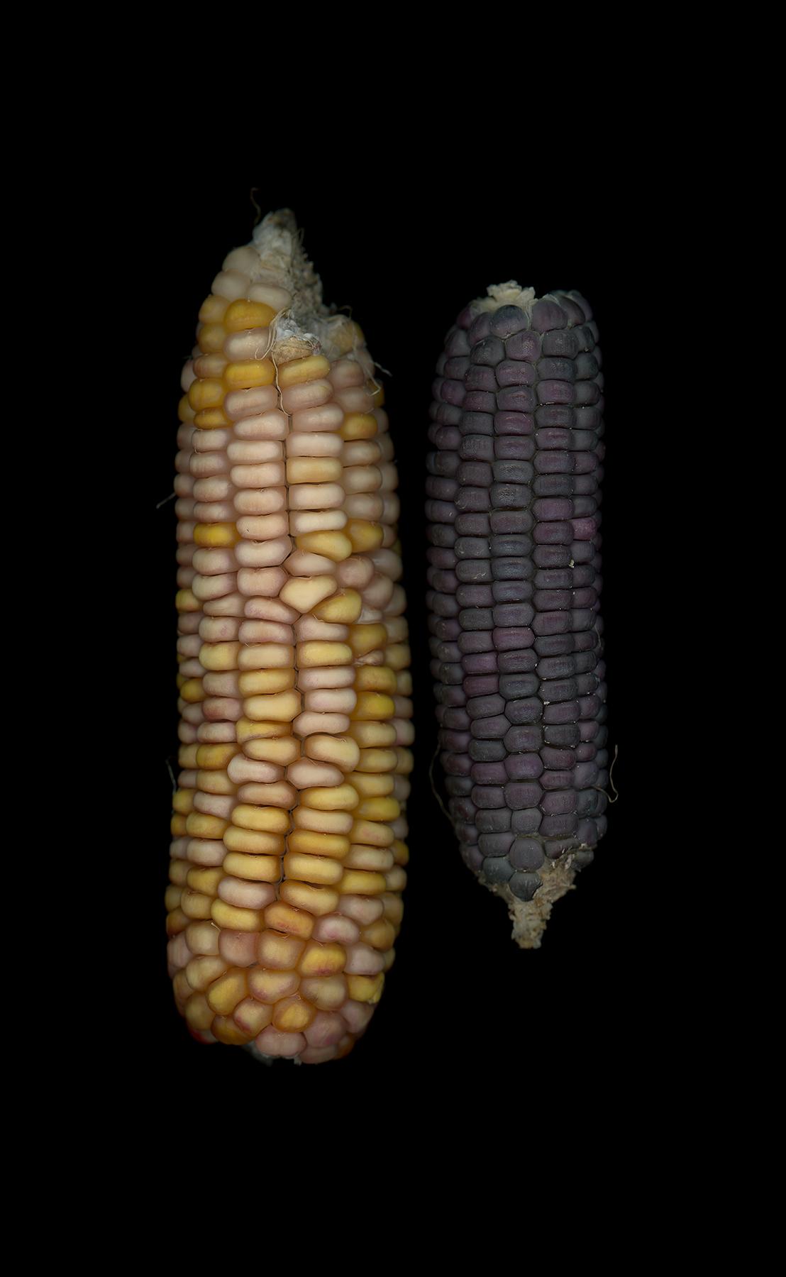 03_Ozone_72_Corn.jpg