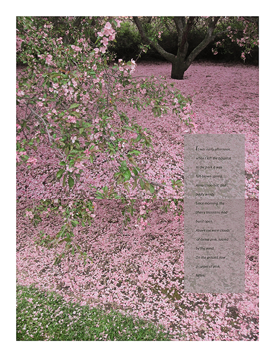 03 Lyon_Cherry blossoms from Book of Hours low res.jpg