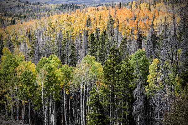 """Backcountry - Wyoming   Photographic Print   16""""x24"""" Print $365  22""""x30"""" Framed $500"""