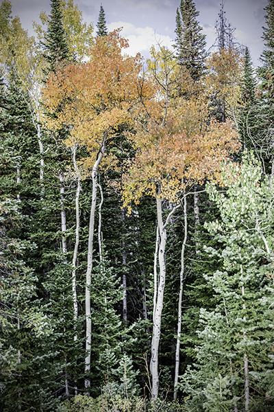 "Chrimson Ladies - Wyoming   Photographic Print   16""x24""  Print $365  22""x30"" Framed $500"