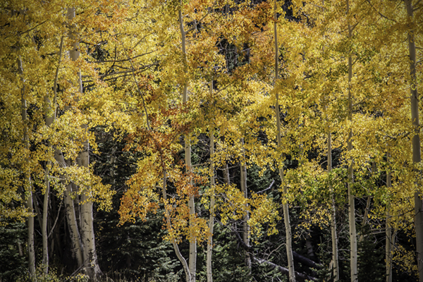 """Fleeting Color - Wyoming   Photographic Print   16""""x24"""" Print $365  22""""x30"""" Framed $500"""