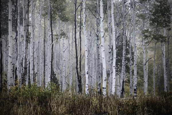 "Foggy Morning - Wyoming   Photographic Print   16""x24""  Print $365  22""x30"" Framed $500"