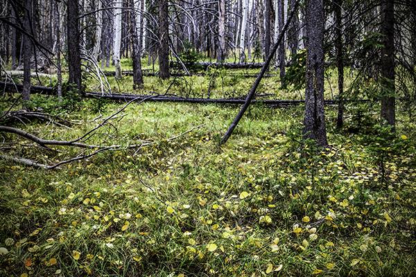 "Gold Flecked Carpet - Wyoming   Photographic Print   16""x24""  Print $365  22""x30"" Framed $500"