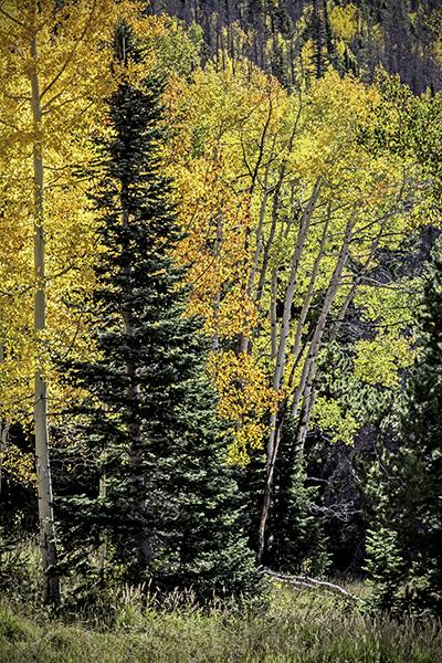 "Mixed Neighborhood - Wyoming   Photographic Print   16""x24"" Print $365  22""x30"" Framed $500"