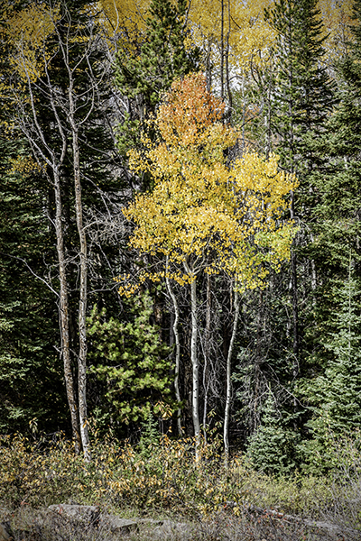 """Young Things - Wyoming   Photographic Print   16""""x24""""  Print $365  22""""x30"""" Framed $500"""