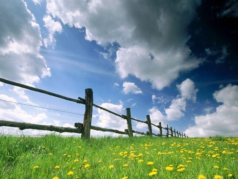 spring-grass.jpg