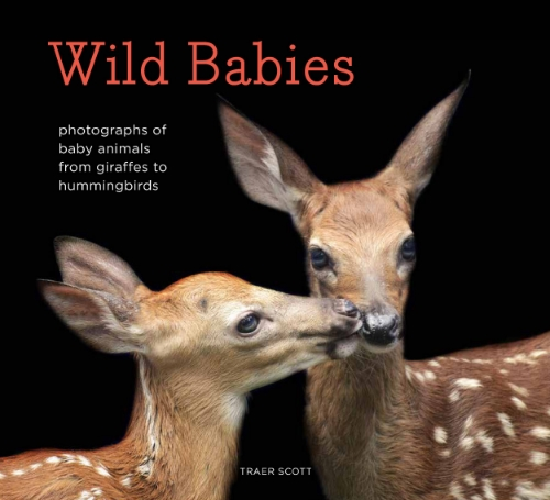 Bestselling author and photographer Traer Scott captures the magic and wonder of a young animal's first weeks of life in this heartwarming collection of photographs. Featuring portraits of more than 30 baby animals,  Wild Babies  provides a glimpse into the rarely seen world of newborn creatures. From rambunctious little kangaroos and fluffy fox cubs to a wide-eyed elephant seal pup and a tiny painted turtle, these playful images are paired with engaging text that highlights the remarkable moments in wild infants' first days as they learn to eat, walk, swim, and fly. Animal lovers will delight in these close-up shots and fun trivia celebrating the unique personalities of irresistibly cute creatures navigating their way out into the world for the very first time.  Chronicle Books, August 2, 2016