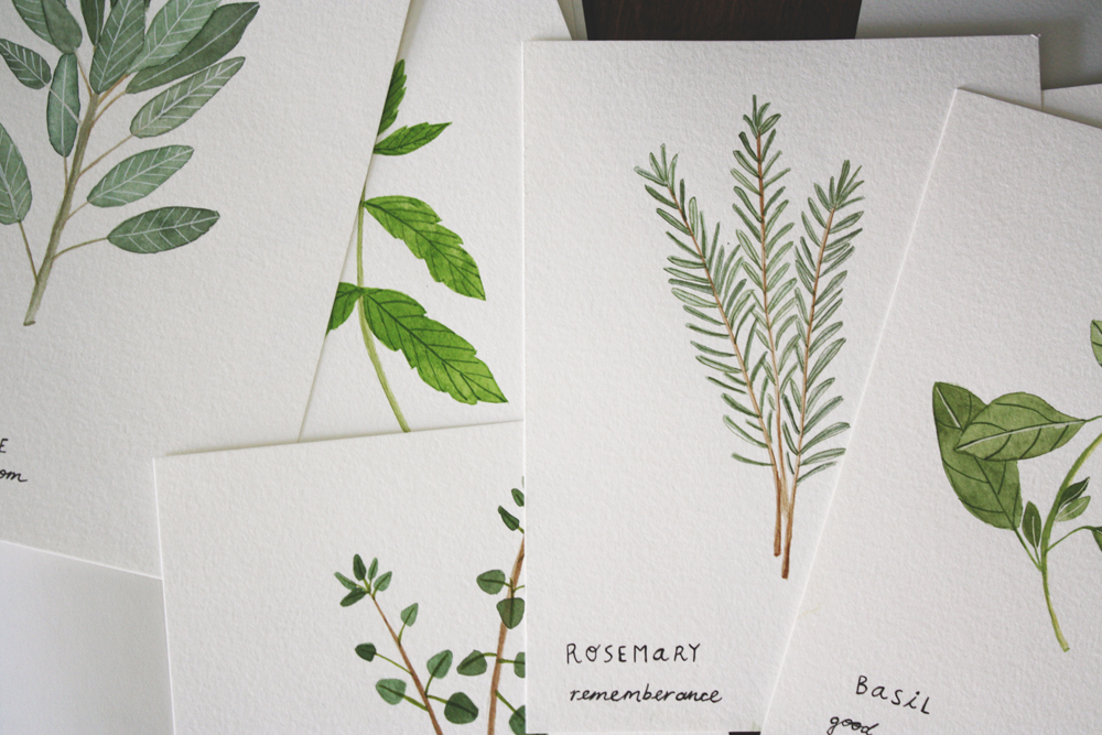 herb-illustrations