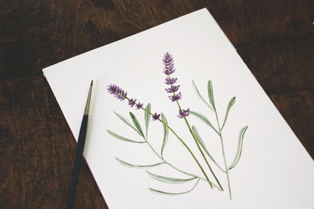 lavender illustration by Jenni Haikonen.jpg