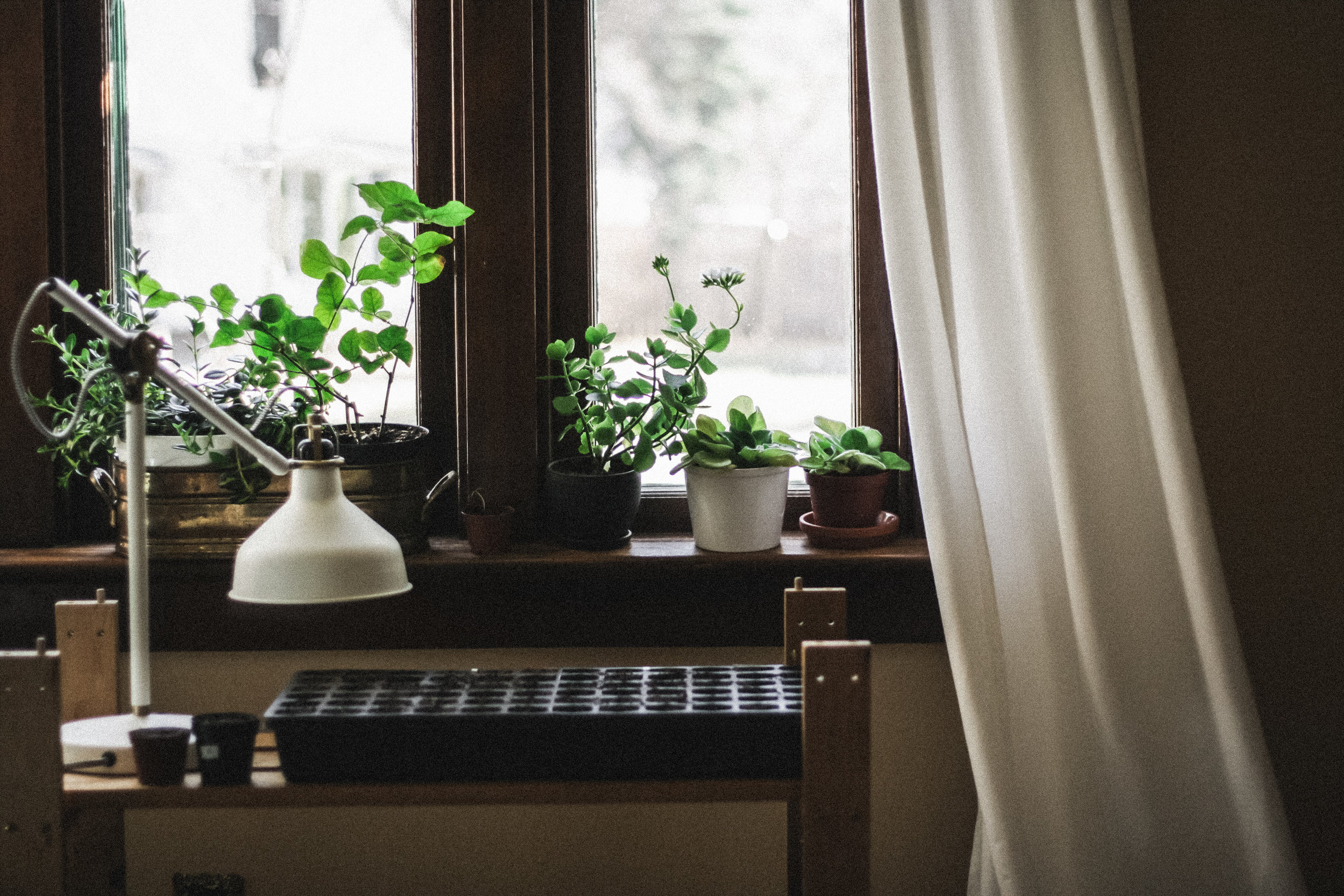 Windowsill-plants.jpg