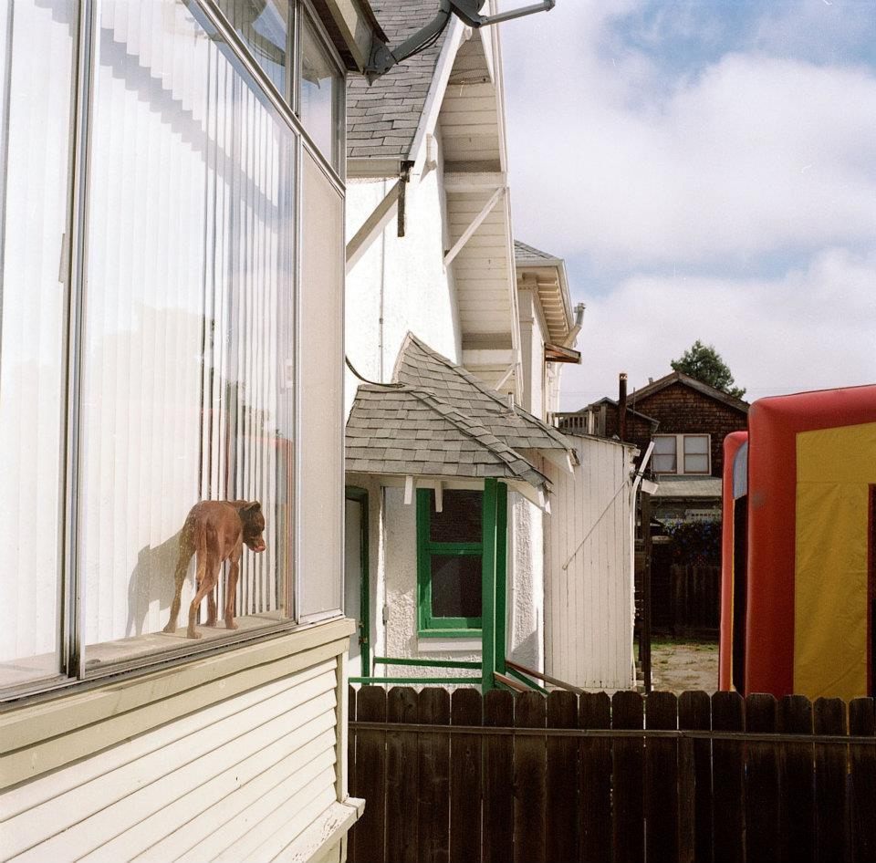 Bounce_house_54thstreet_dog.jpg