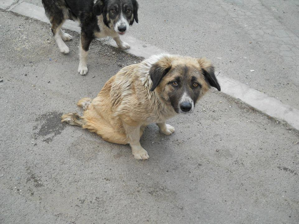 Injured dogs are left with no medical care, suffering from infection, immobility, and horrible pain.