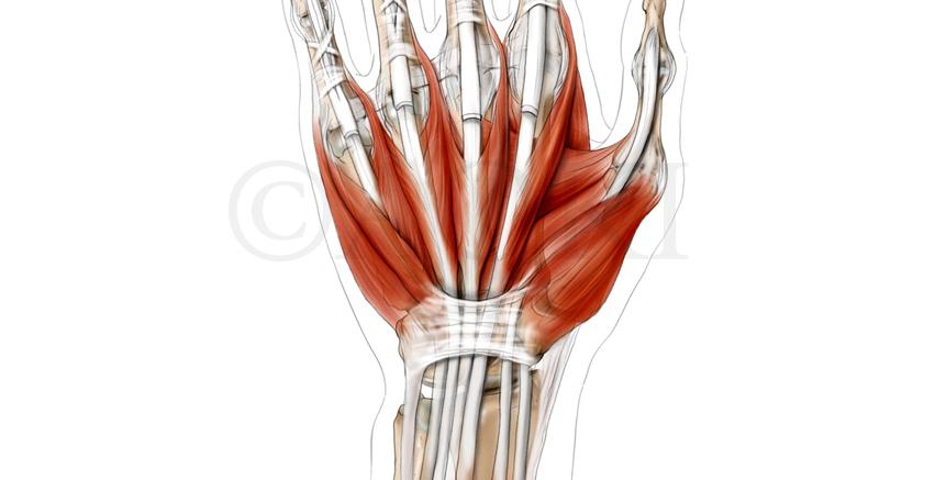 Anatomize_Homepage_Slider-6.jpg