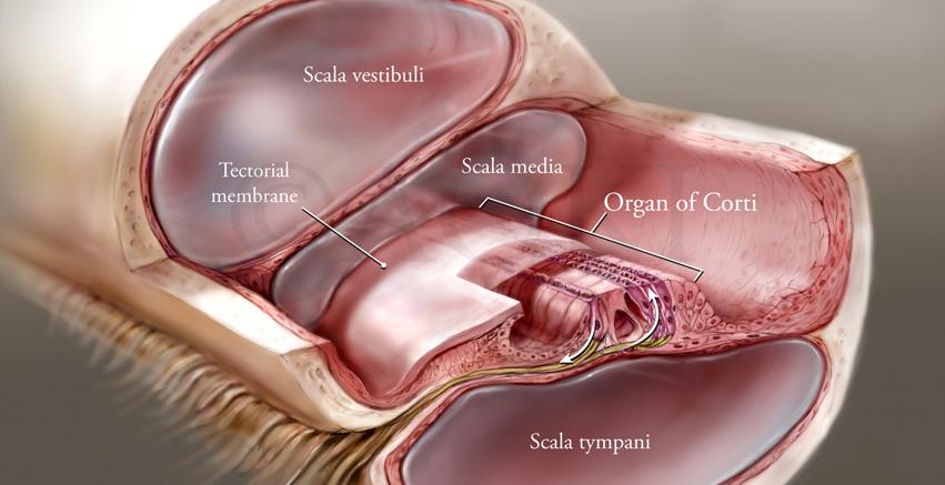 Anatomize_Homepage_Slider-1.jpg