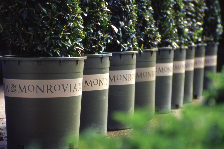 Maureen-Erbe-Design-Monrovia-Plants-02.jpg