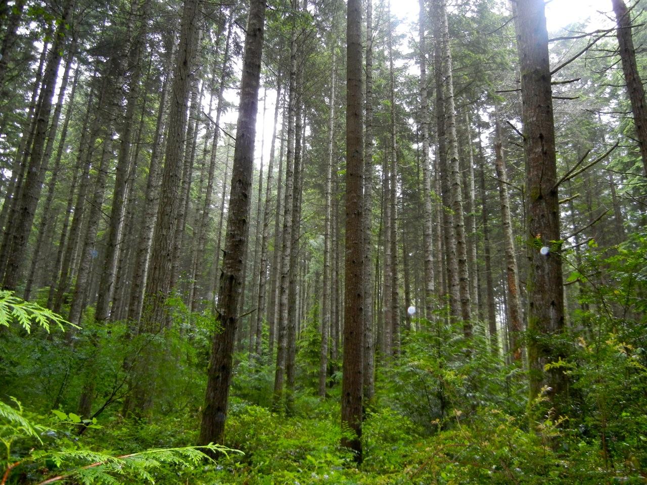 light_in_forest_wallpaper_2560x1440.jpg