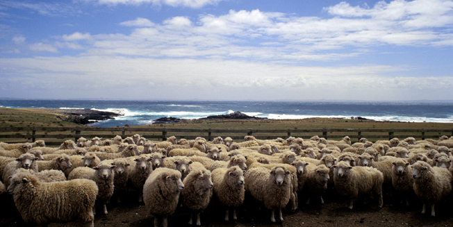 "Sheep in New Zealand tend to have a view from where ever they ""work"""