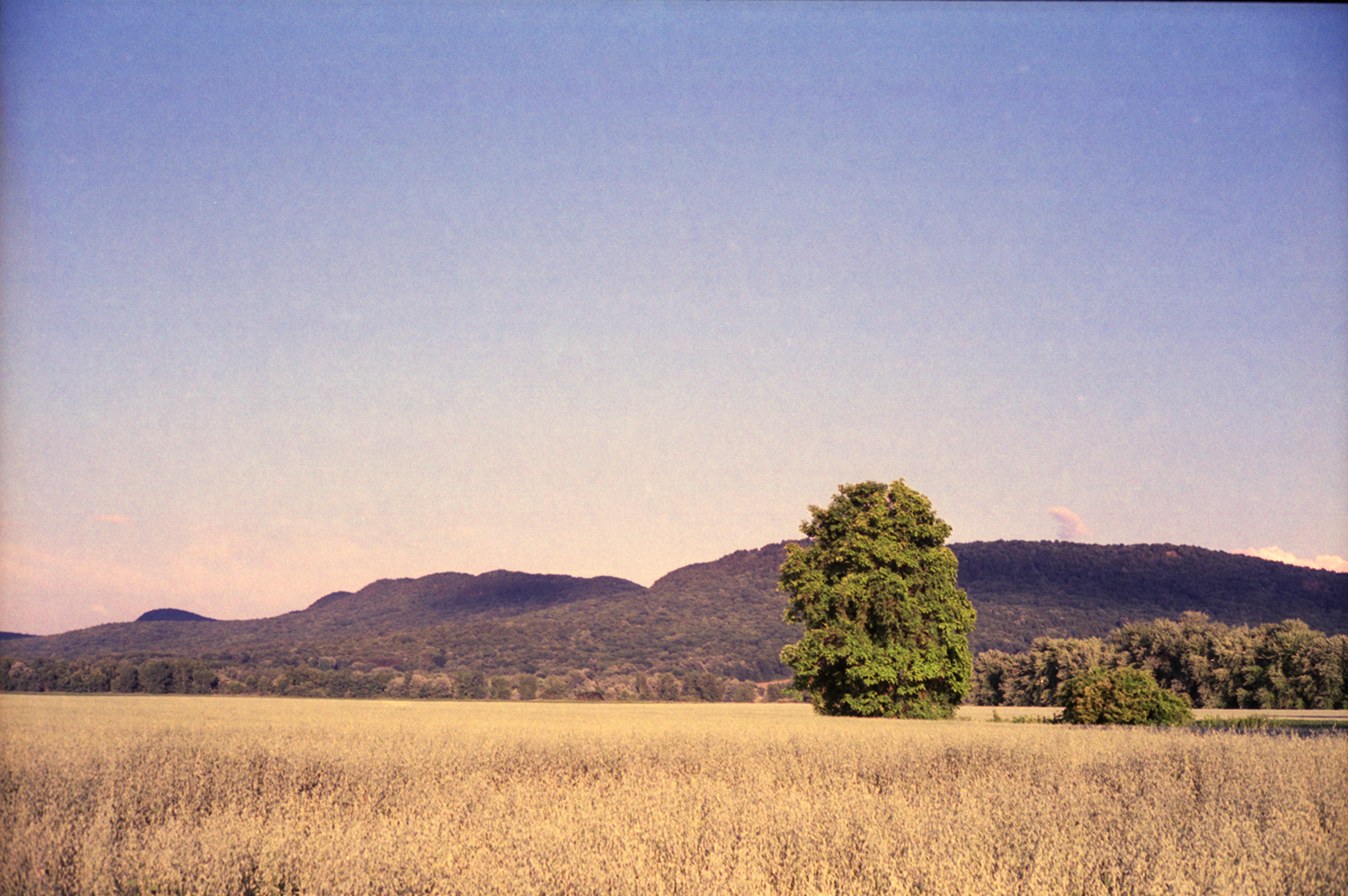tree_mountains_northampton_field_sized.jpg