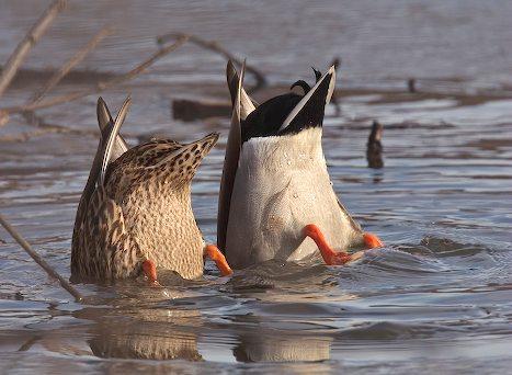 """""""If it looks like a duck, walks like a duck, quacks like a duck … then it probably is a duck"""""""