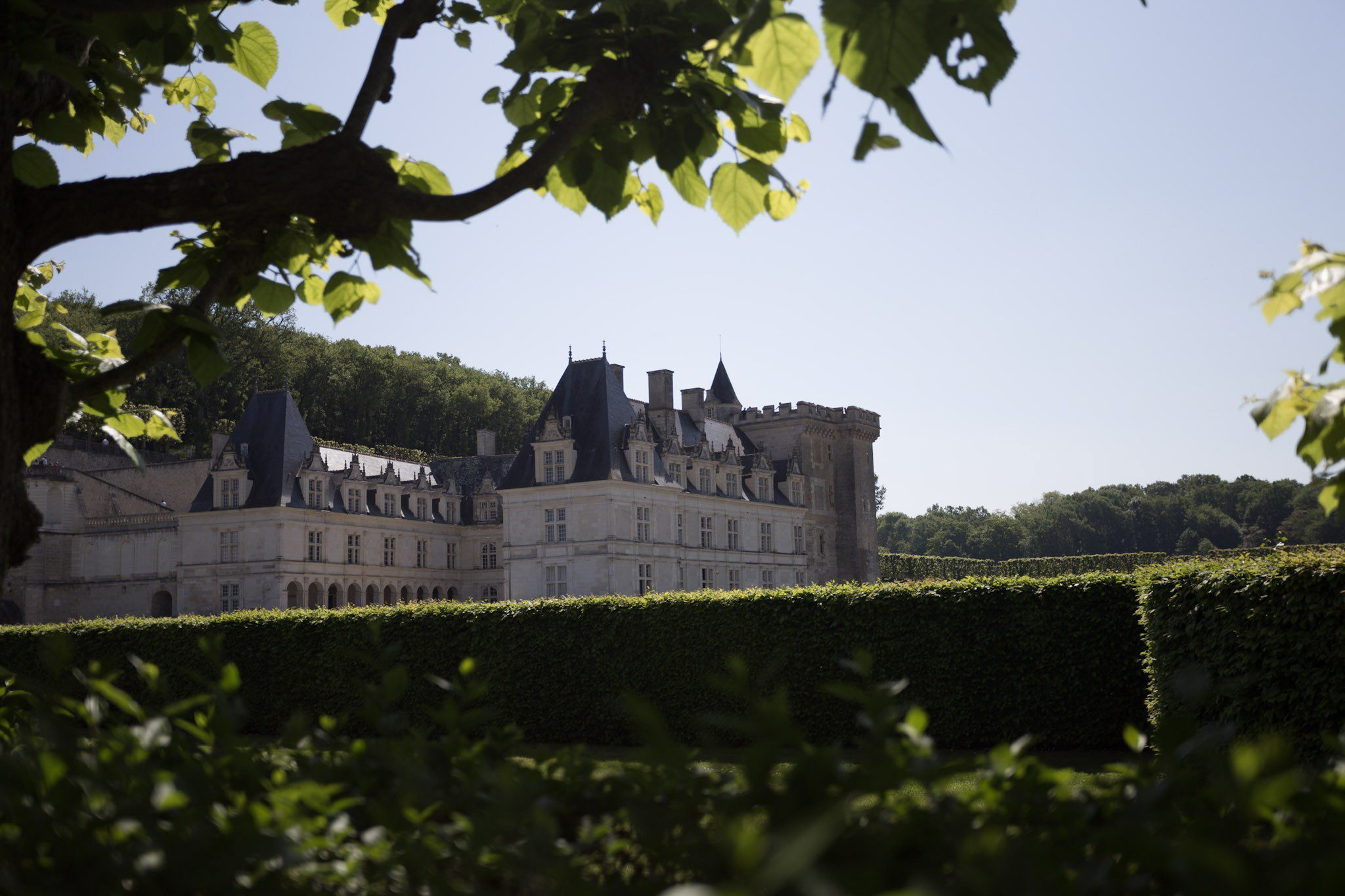 Riding up to the chateau we were greeted with this sight over the hedges