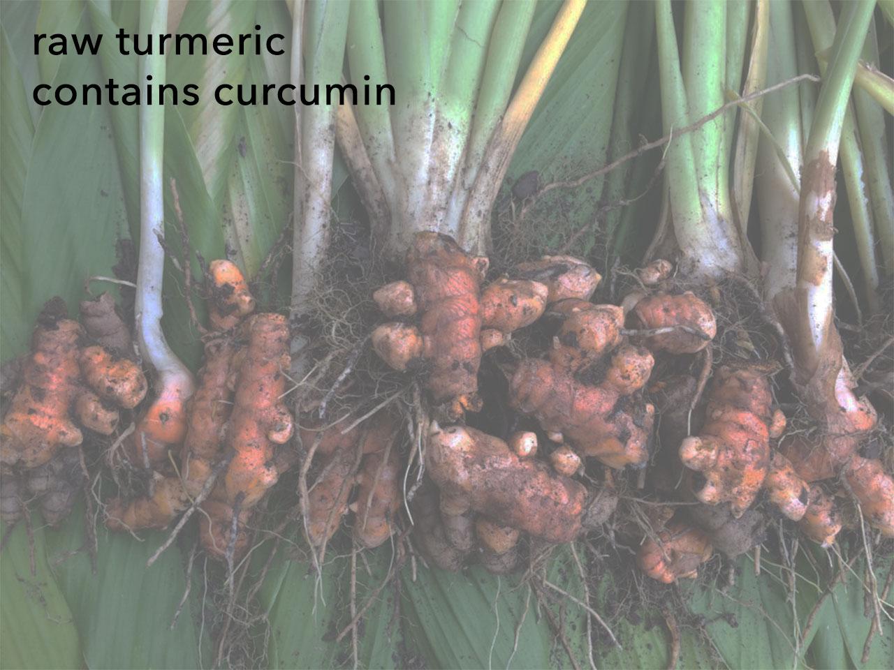 raw turmeric contains curcumin
