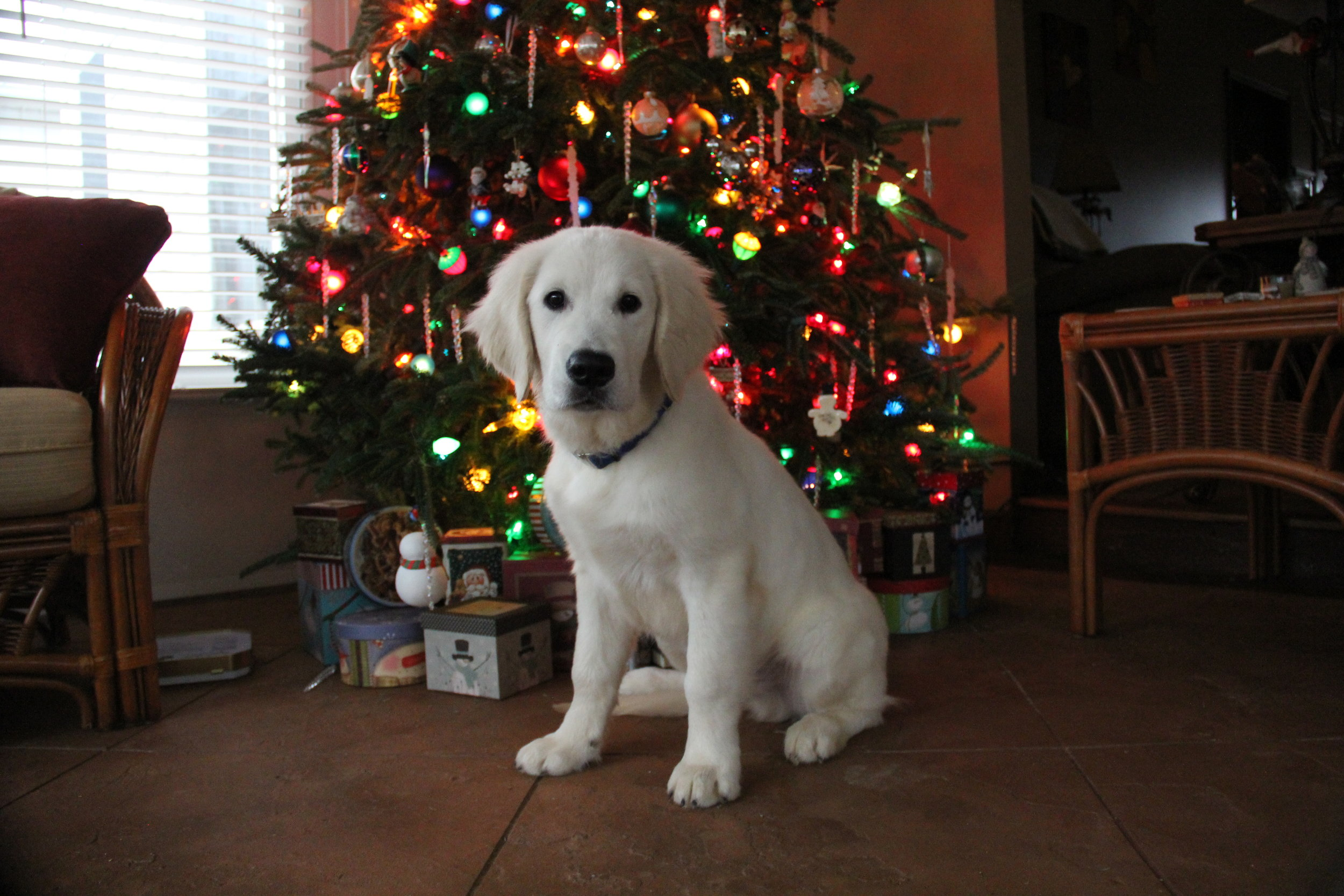 Merry Christmas Bo 2016