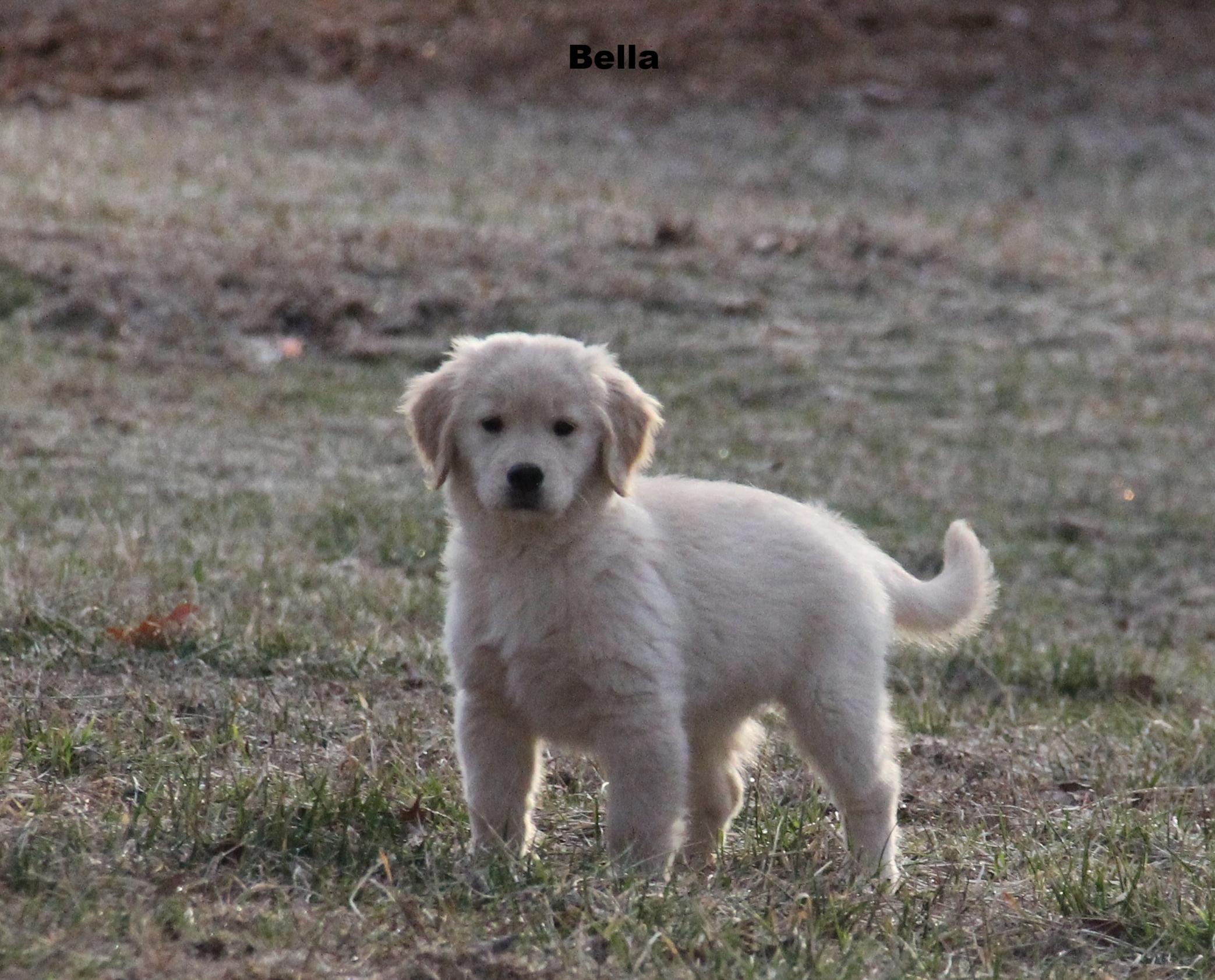 Bella 2-3-18 (2).JPG