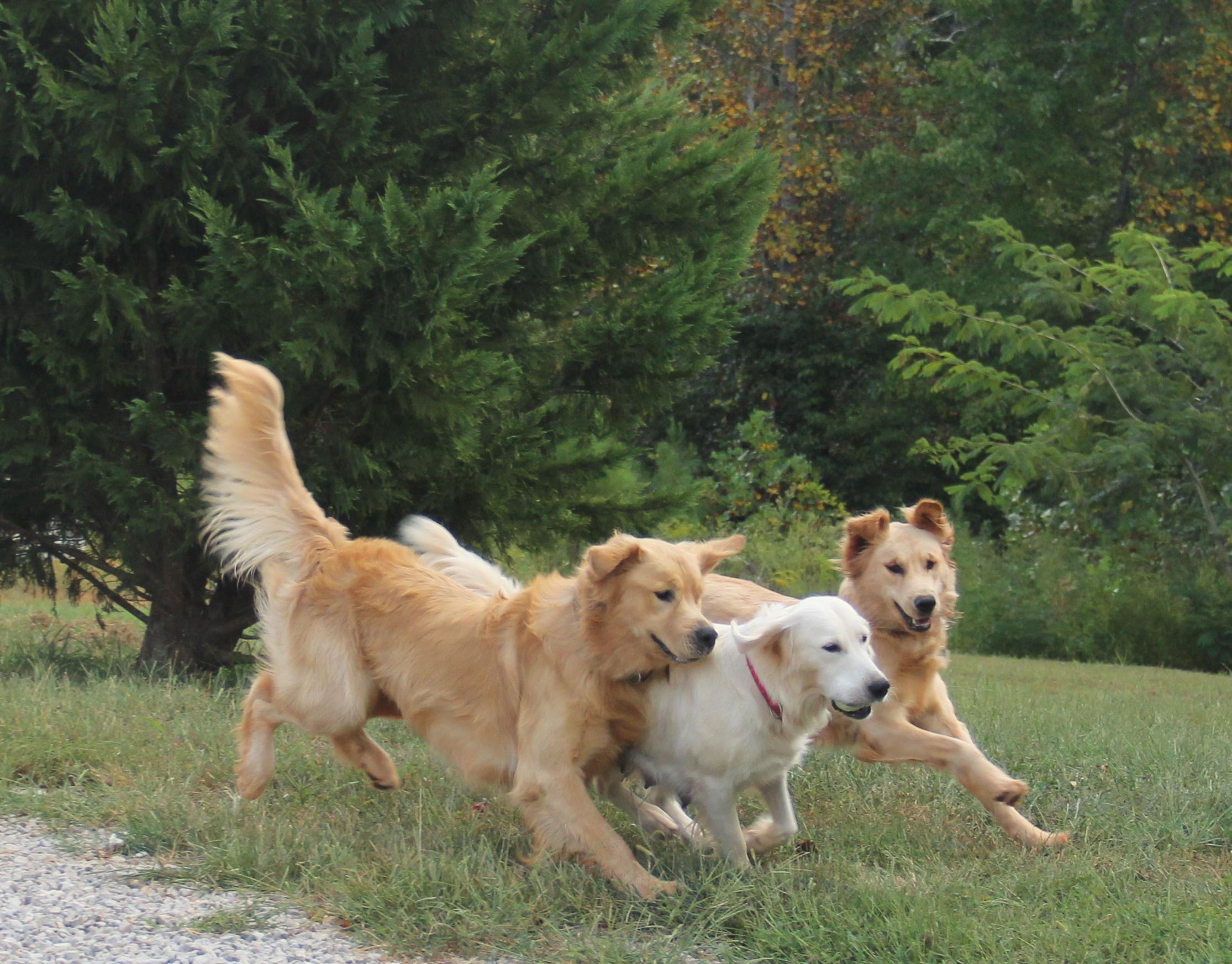 Bentley, Molly & Gracie