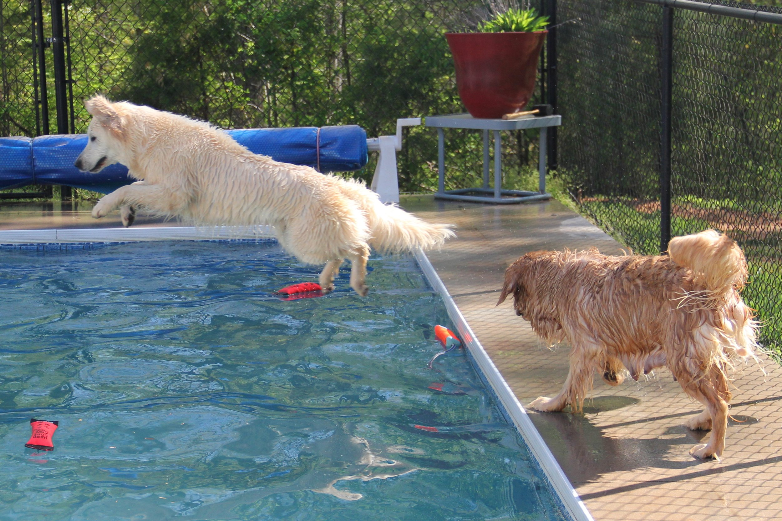 Molly diving in