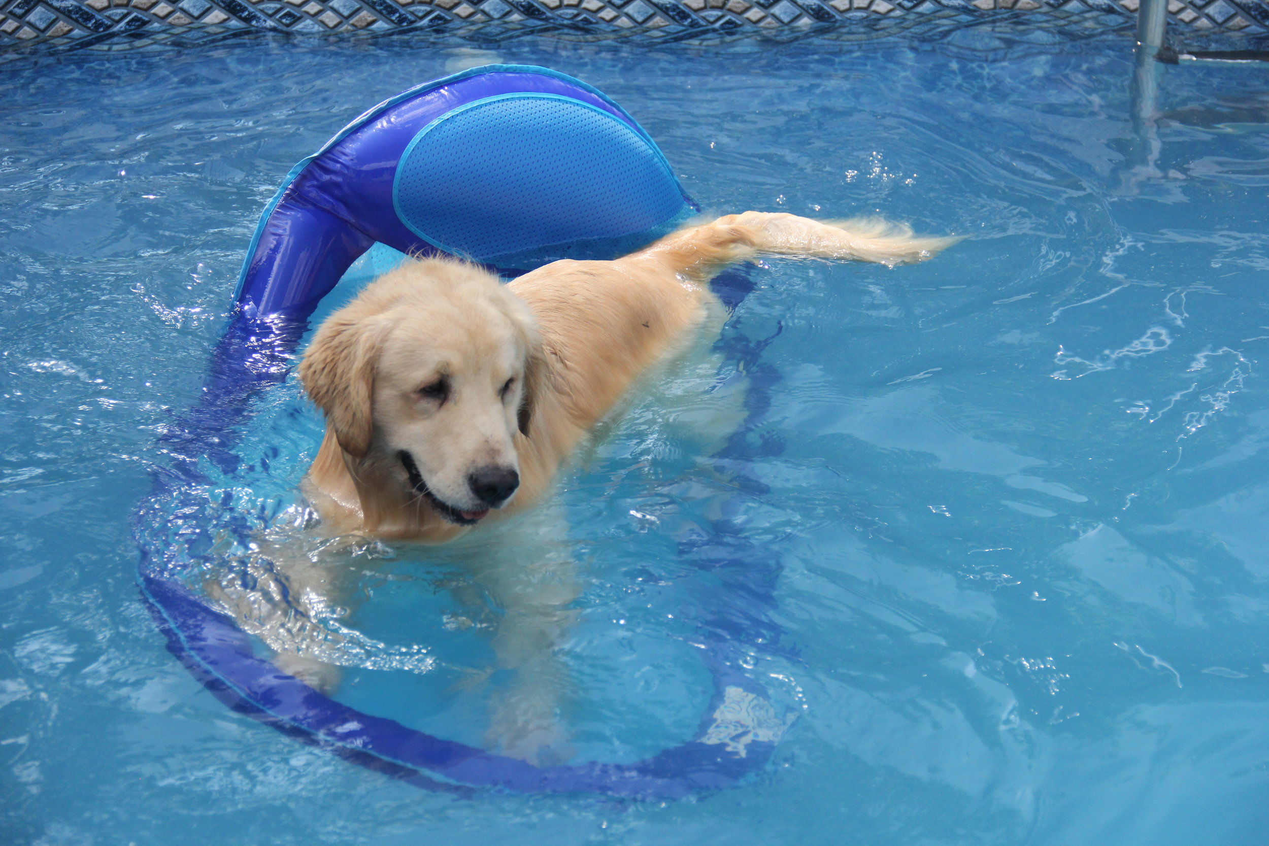 Bailey loves to float in the pool