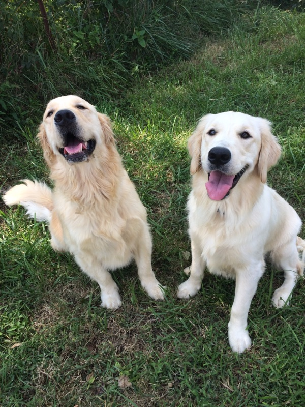 Ginger on the right with her brother Finley 2016 (Bailey)