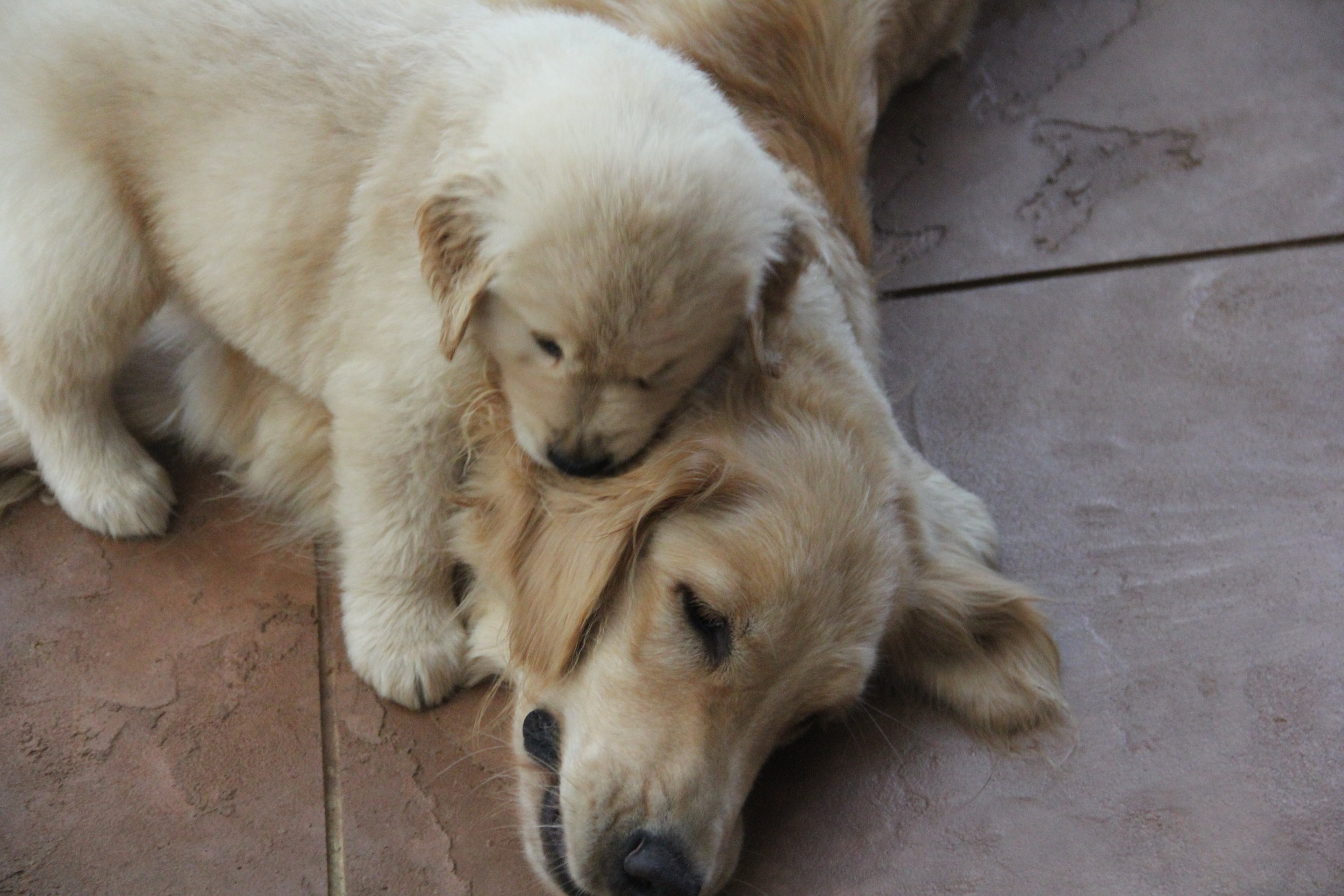Gracie playing with her puppy